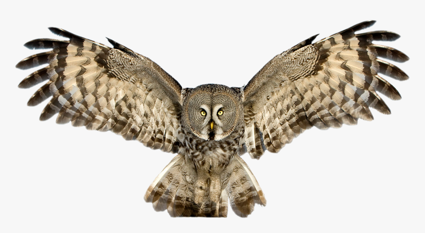 Download Owl Png Pic - Owl Png, Transparent Png, Free Download