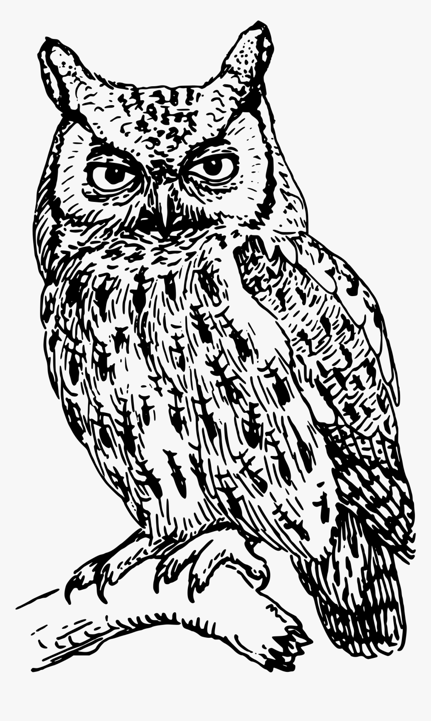 Download Owl Png Transparent Image - Clip Art Black And White Owl, Png Download, Free Download