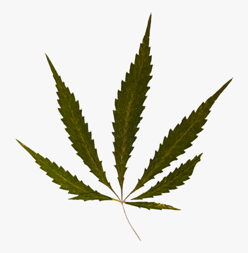 Transparent Marijuana Leaf Silhouette Png - Pot Leaf, Png Download, Free Download