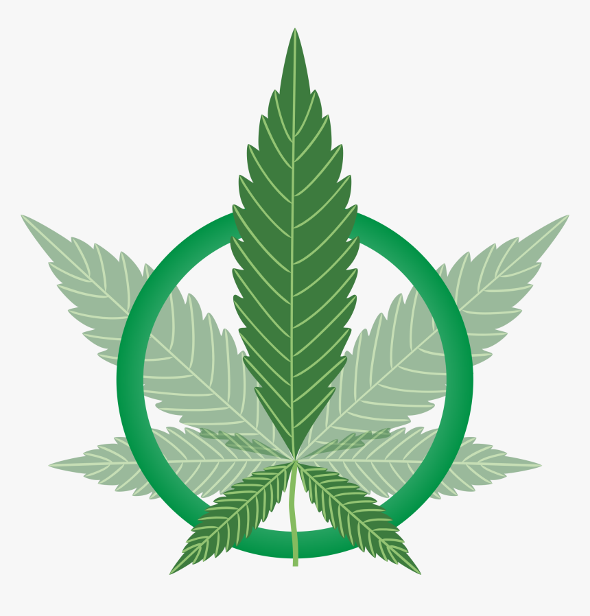 Cannabis Leaf Vector Hd Png Download Kindpng