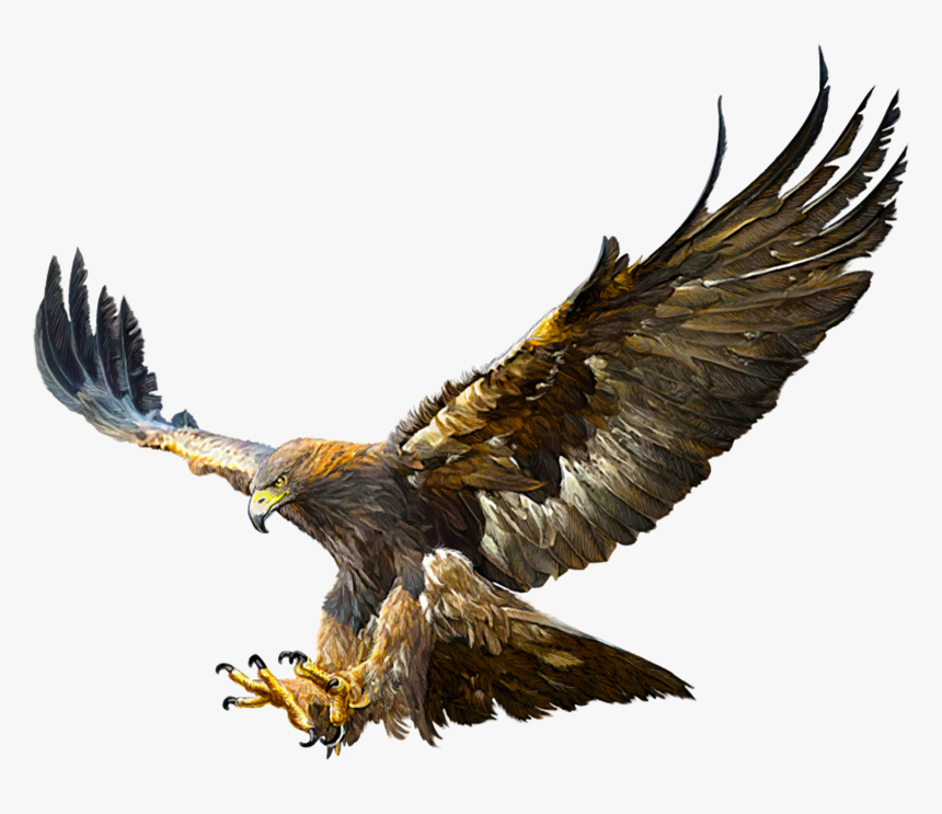 Cassandra Pendragón - La Princesa Engreída 0-7819_bald-eagle-golden-eagle-flight-drawing-flying-golden