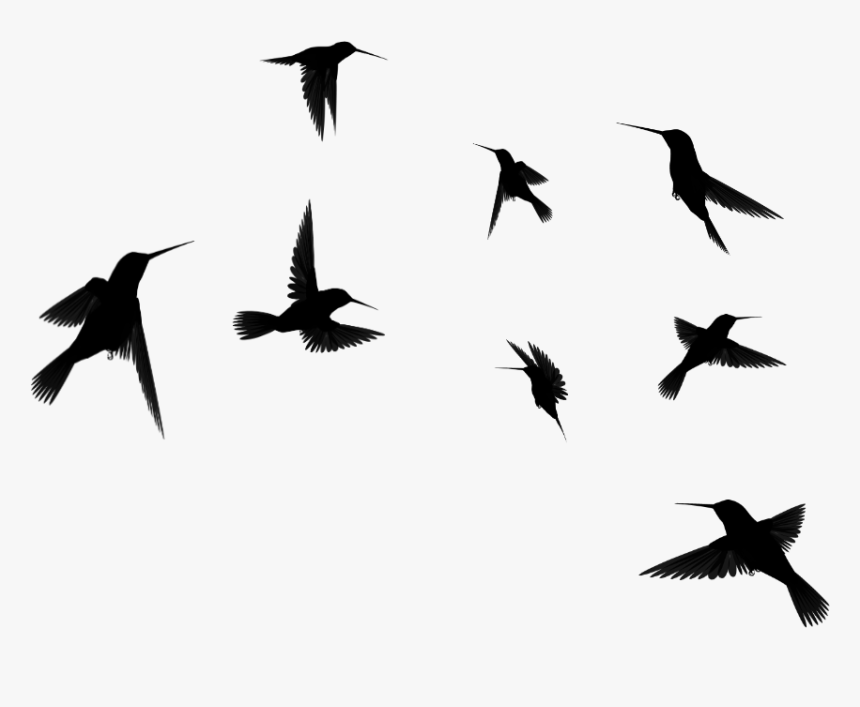 Clip Art Birds Google Search Beauty - Flying Birds Clipart Black And White, HD Png Download, Free Download
