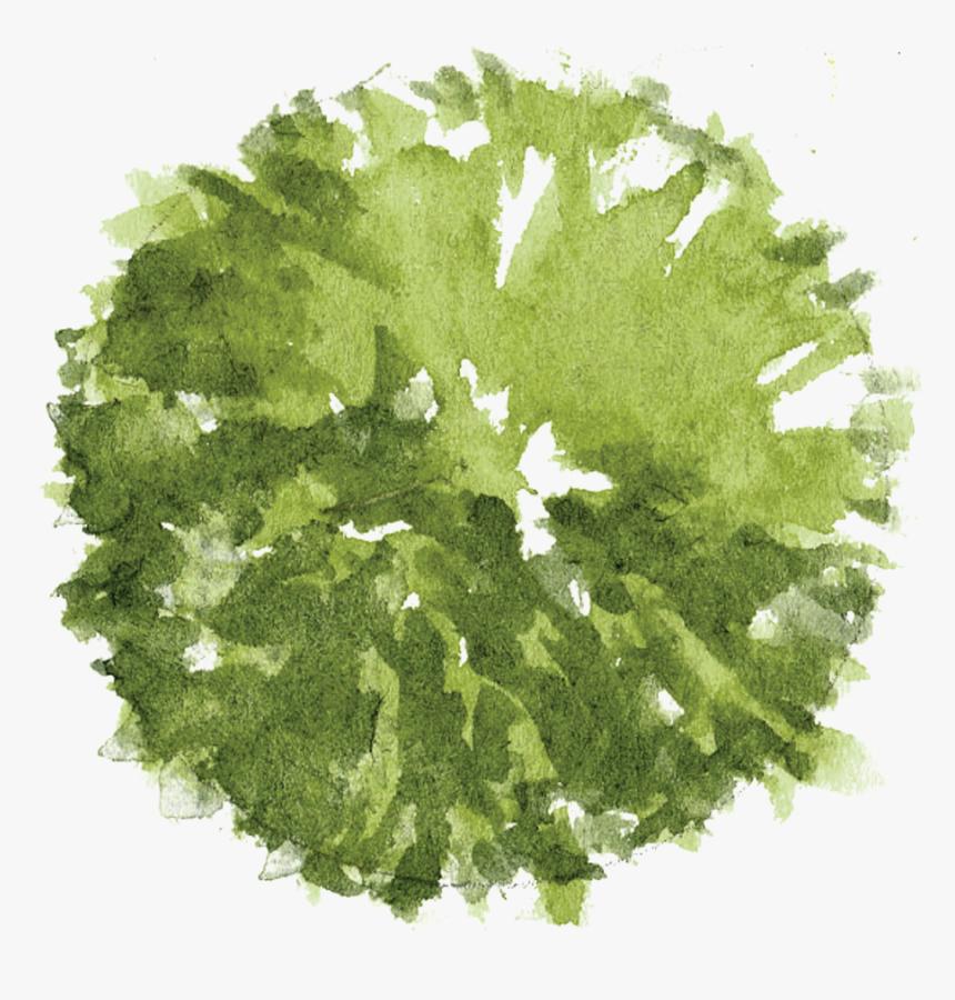 Tree Plan Png - Photoshop Trees Plan Png, Transparent Png, Free Download