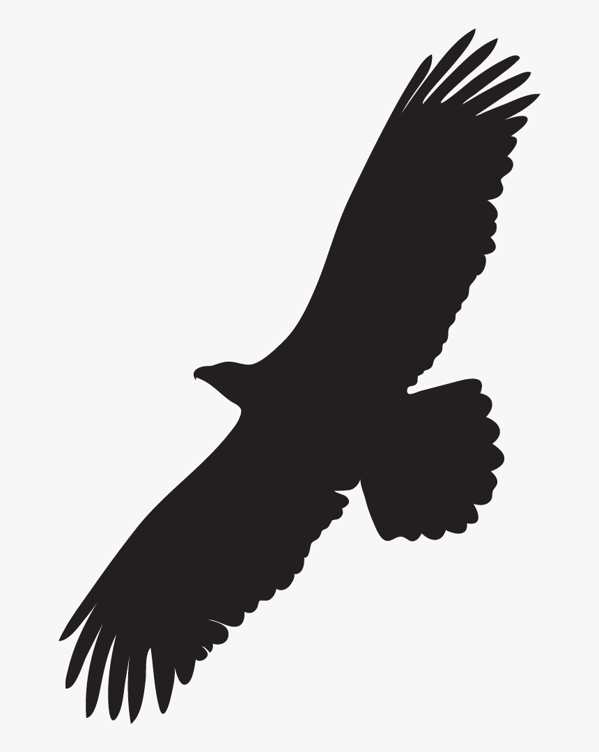 Black And White Eagle Silhouette Of A Bald Eagle Hd Png Download Kindpng Find here the best collection of eagle bird silhouette, clipart images, pictures and vectors. bald eagle hd png download