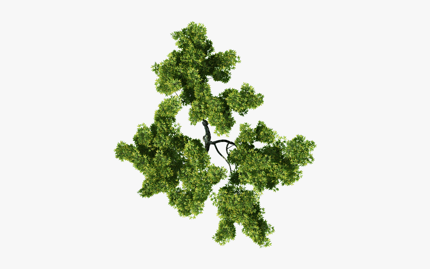 tree top view png for photoshop transparent png kindpng view png for photoshop transparent png