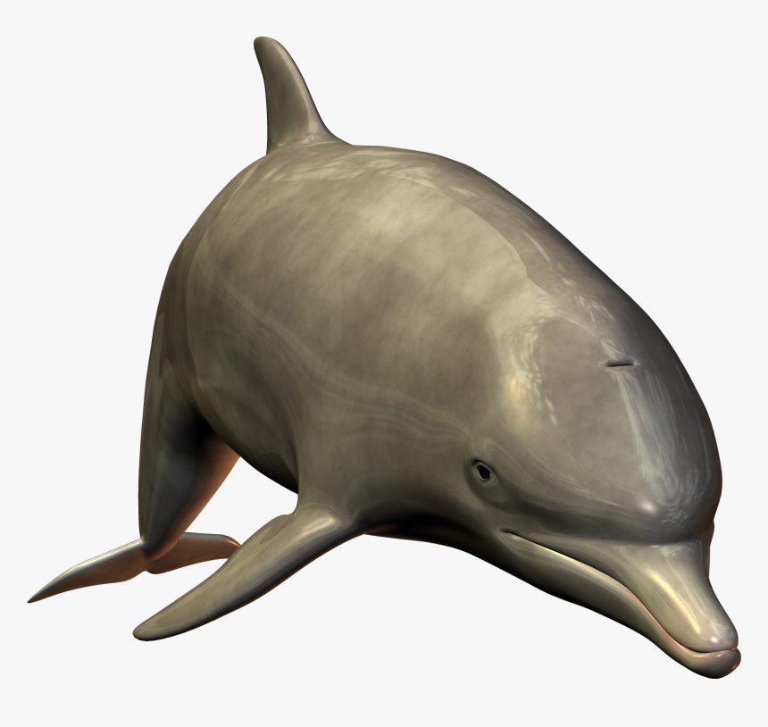 Dolphin Hd 3d Image - Bottlenose Dolphin Dolphin White Background, HD Png Download, Free Download