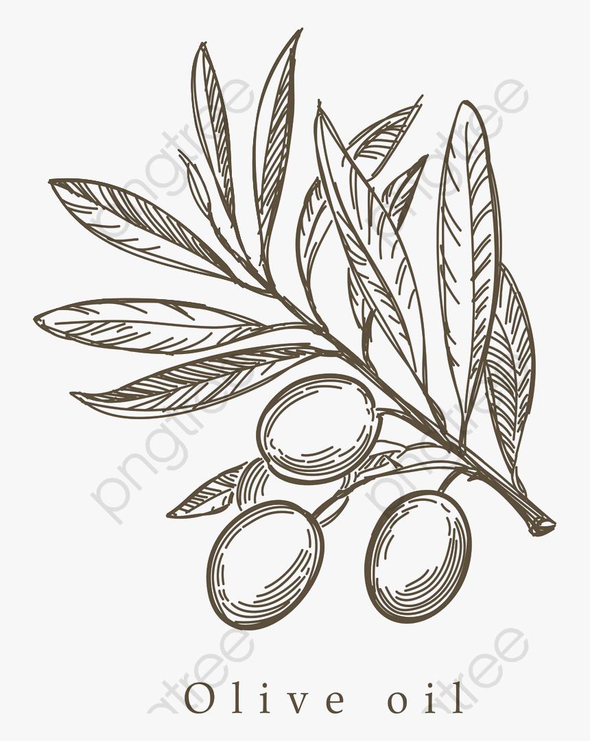 Transparent Olive Branch Clip Art - Olive Leaf Drawing Png, Png Download, Free Download