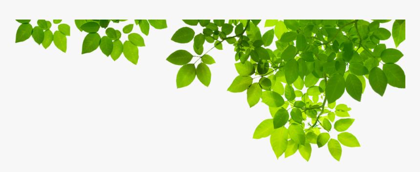 Green Leaf Png Photo - Green Leaves Border, Transparent Png, Free Download