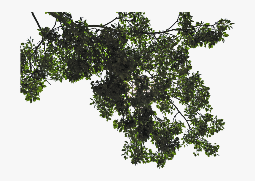 Tree Leaves Png Transparent Image - Tree Leaves Png, Png Download, Free Download