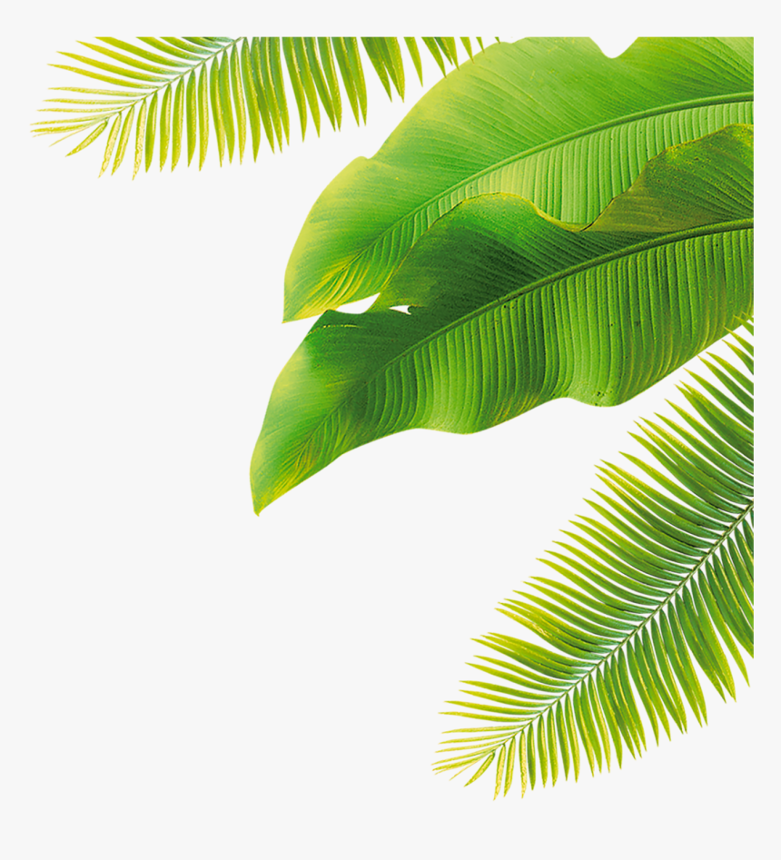 Leaves Fruit Green Flower Free Download Image - Transparent Background Banana Leaves Png, Png Download, Free Download