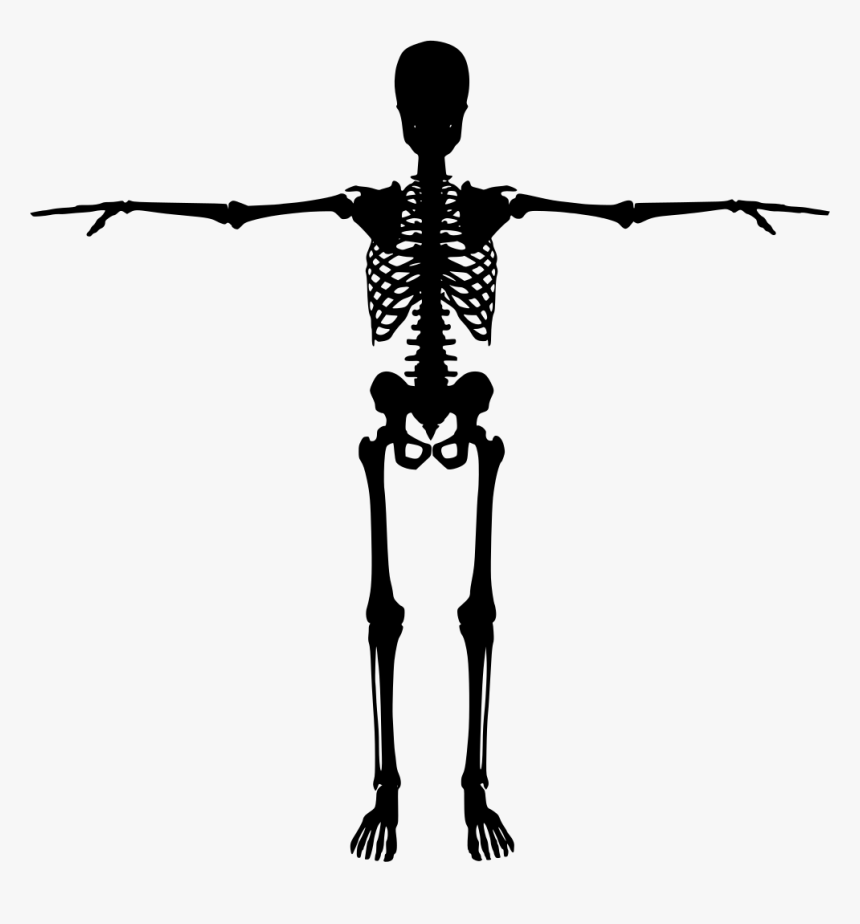 Human Skeleton Bone Silhouette - Human Skeleton Silhouette, HD Png Download, Free Download