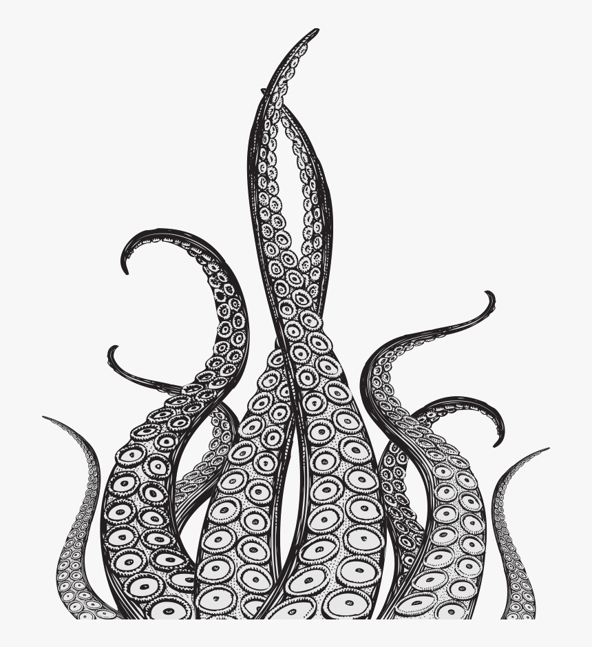 Octopus Tentacles Drawing, HD Png Download, Free Download