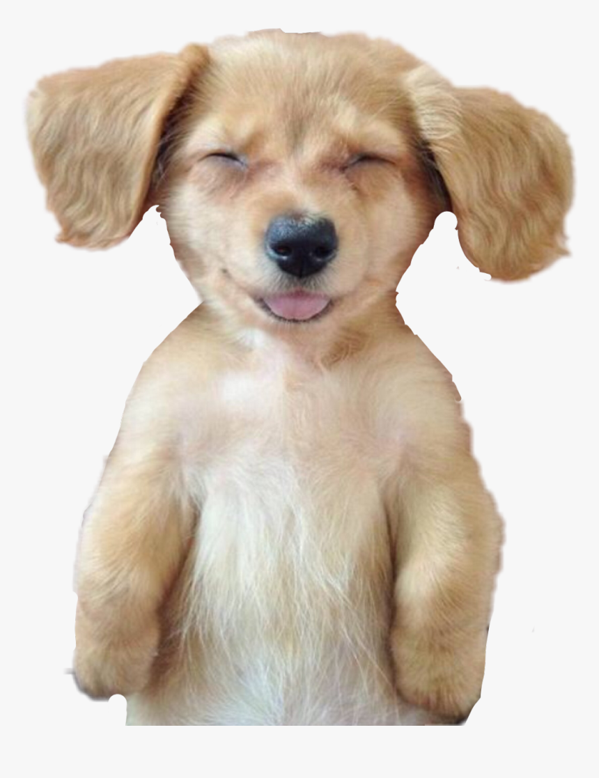 Dog Puppy Sleeping Nap Funny Smiling Cute Ftesticker Do I Feel After A Massage Hd Png Download Kindpng