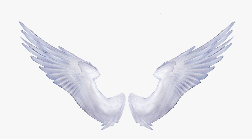 Angel Wings Portable Network Graphics Clip Art Image - Realistic Transparent Angel Wings Png, Png Download, Free Download