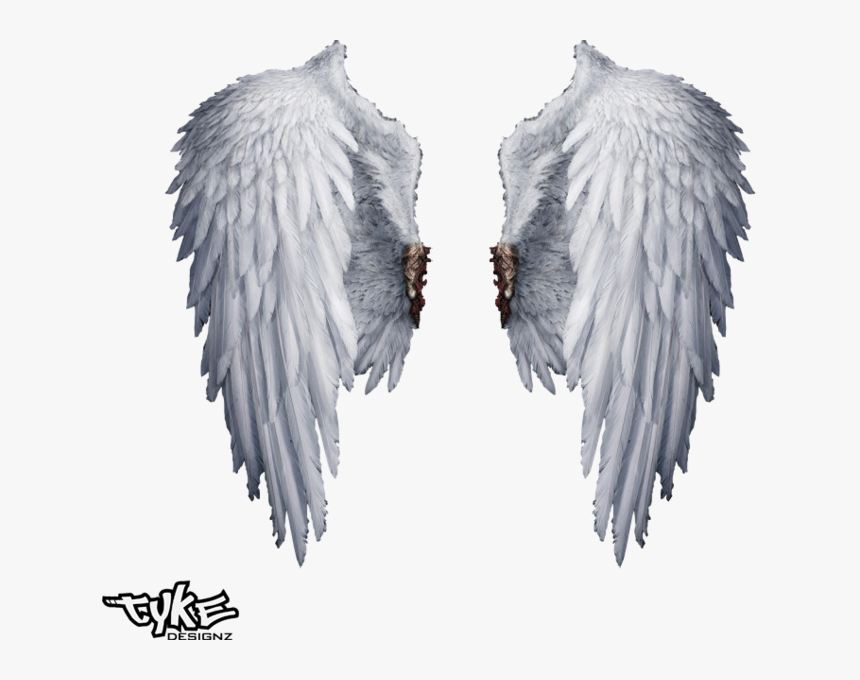 Angel Wings Png Transparent - Transparent Background Angel Wings Png, Png Download, Free Download