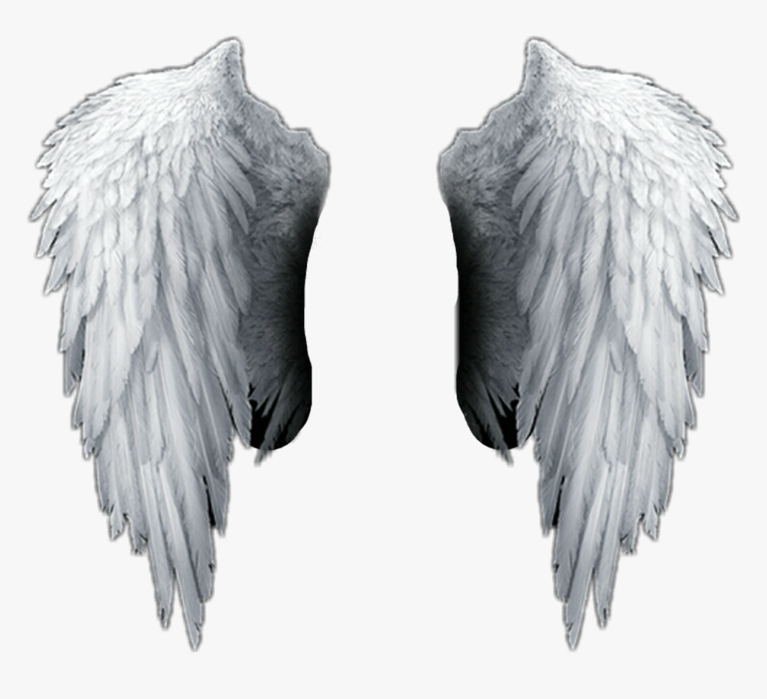 Angel Wings Png Hd , Png Download - Transparent Background Angel Wings Png, Png Download, Free Download