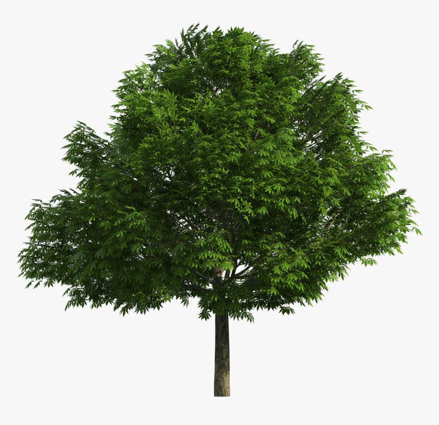 Realistic Tree Png Clip Art - Realistic Tree Tree Png, Transparent Png, Free Download