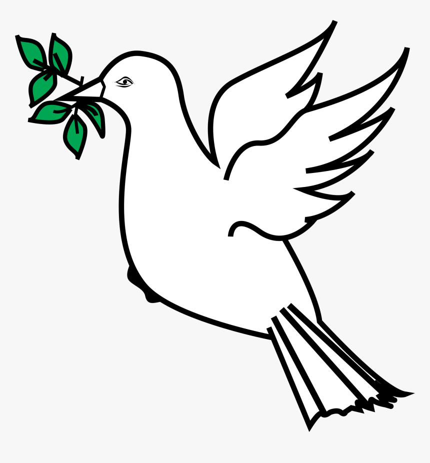 Dove With Olive Branch Png, Transparent Png, Free Download