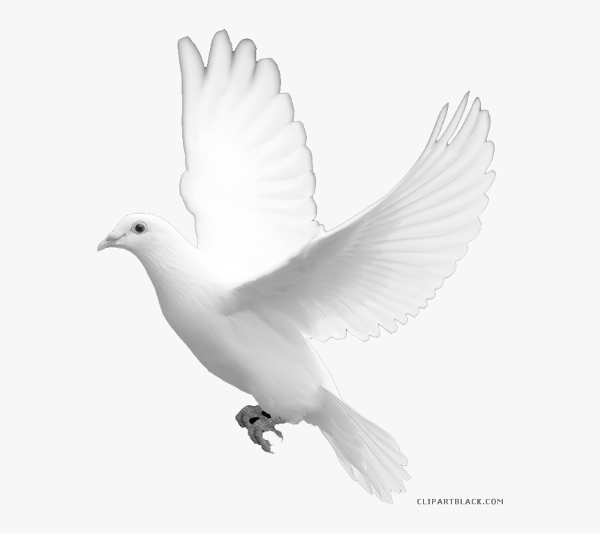 Transparent Dove Clipart Black And White - Wedding White Dove, HD Png Download, Free Download