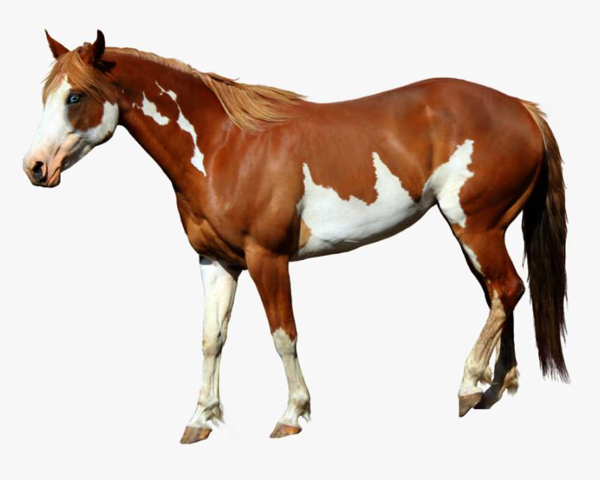 Horse Png Images - Lil Nas X Horse, Transparent Png, Free Download