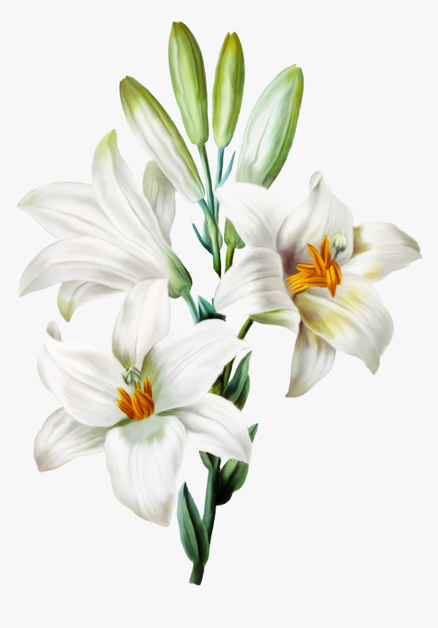 Transparent White Lily Png - Transparent Background Lily Flower Png, Png Download, Free Download