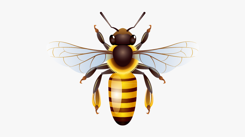 A Bee Clipart