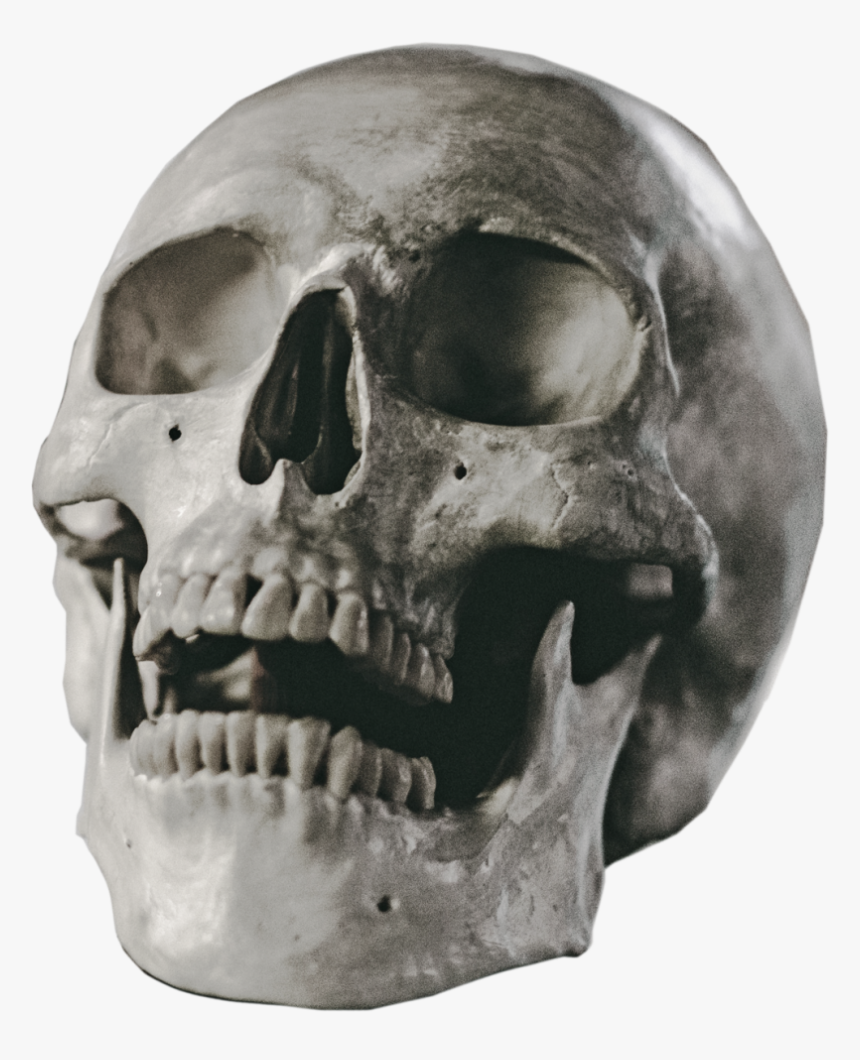 Human Skull Png - Halloween Skull Png, Transparent Png, Free Download