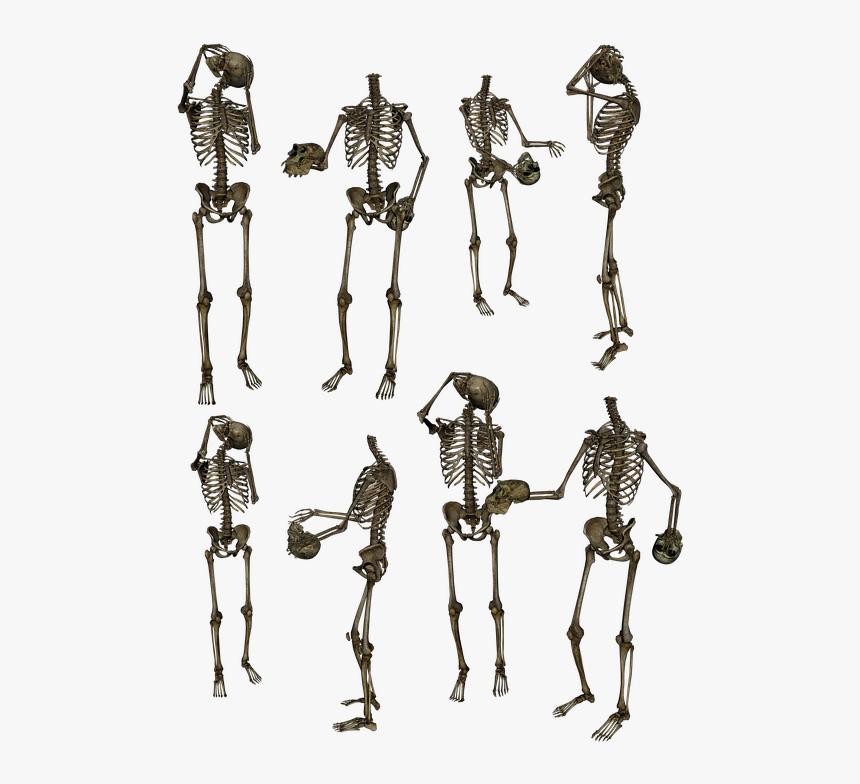 Skeleton Skeletons Bones Skull Funny Humor Human - Skeletons Png, Transparent Png, Free Download