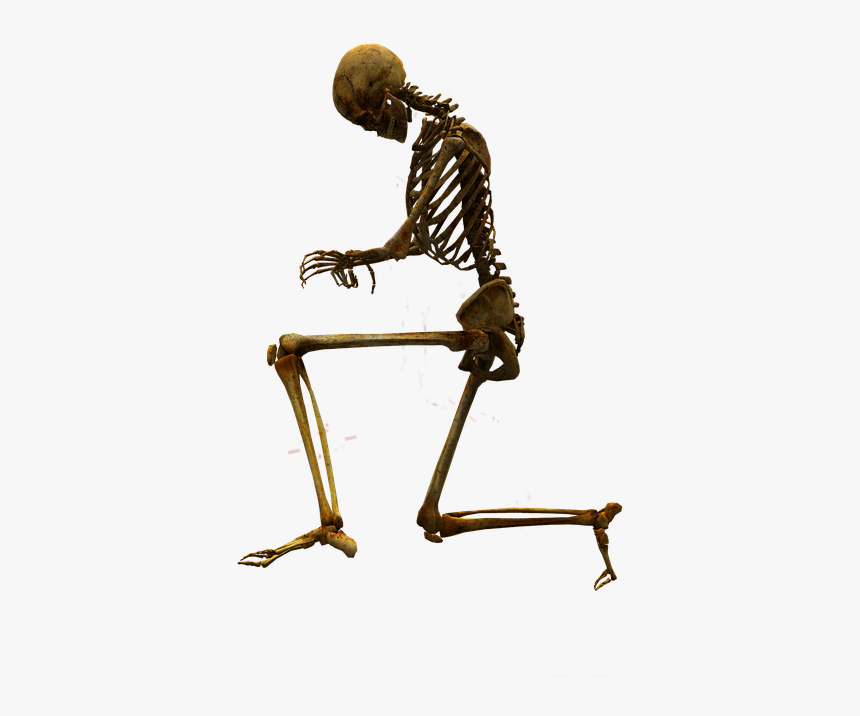 Bone, Skeleton, Skull, Body Worlds - Skull And Body Png, Transparent Png, Free Download