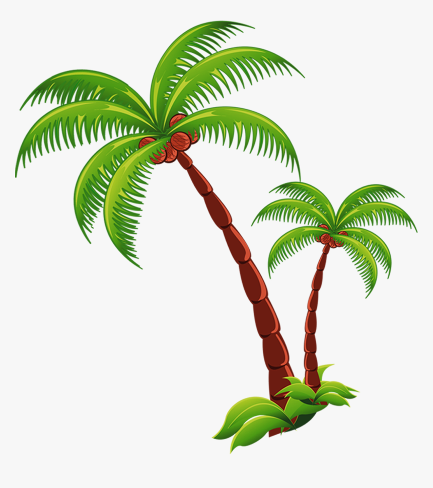 Coconut Tree Png Picture - Coconut Tree Transparent Png, Png Download, Free Download