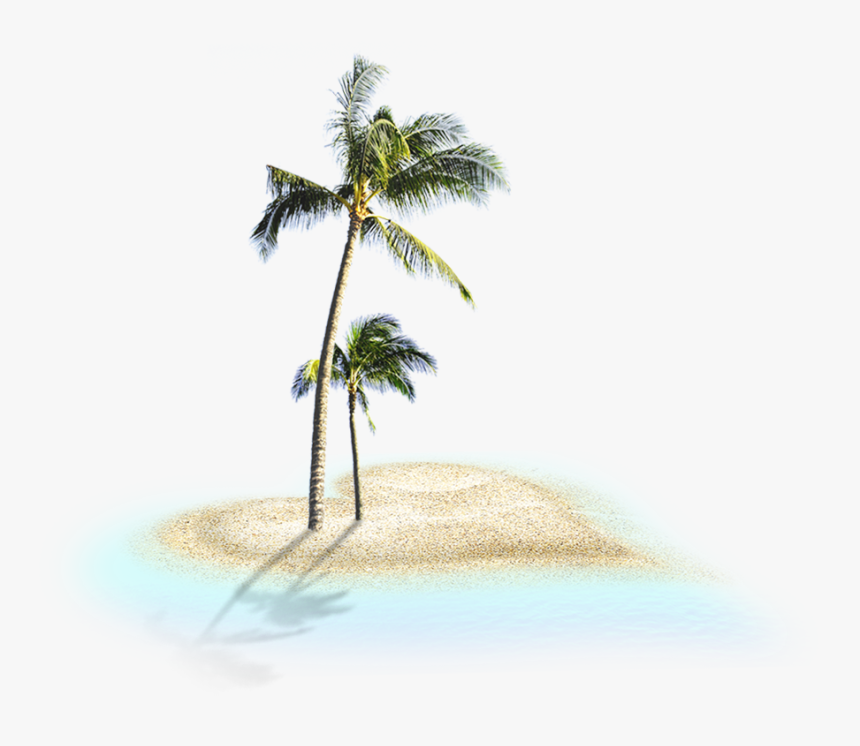 Coconut Trees - Coconut Trees Png, Transparent Png, Free Download