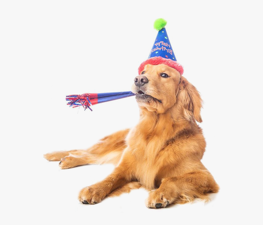Puppy Dog Birthday Clipart Png - Golden Retriever In A Birthday Hat, Transparent Png, Free Download