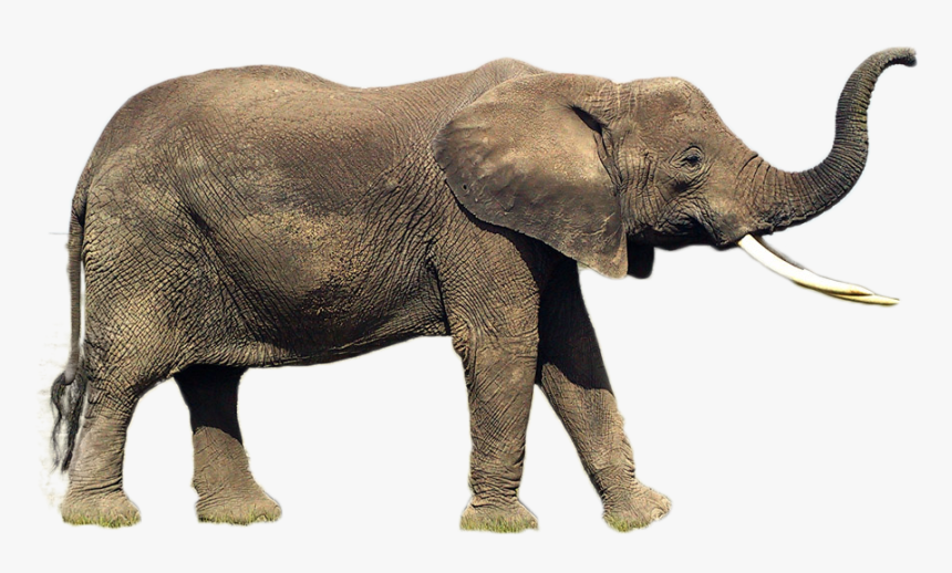 Elephant Png Image Elephant Side View Trunk Up Transparent Png Kindpng Elephant png collections download alot of images for elephant download free with high quality for designers. elephant png image elephant side view