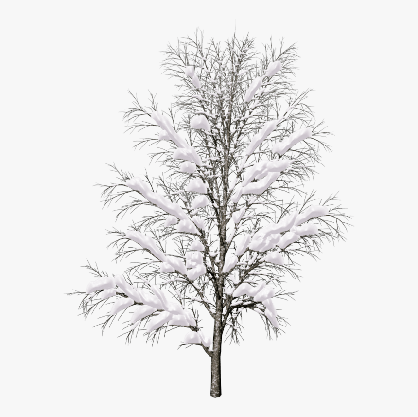 Pine Tree Branch Png - Snow Covered Trees Png, Transparent Png, Free Download