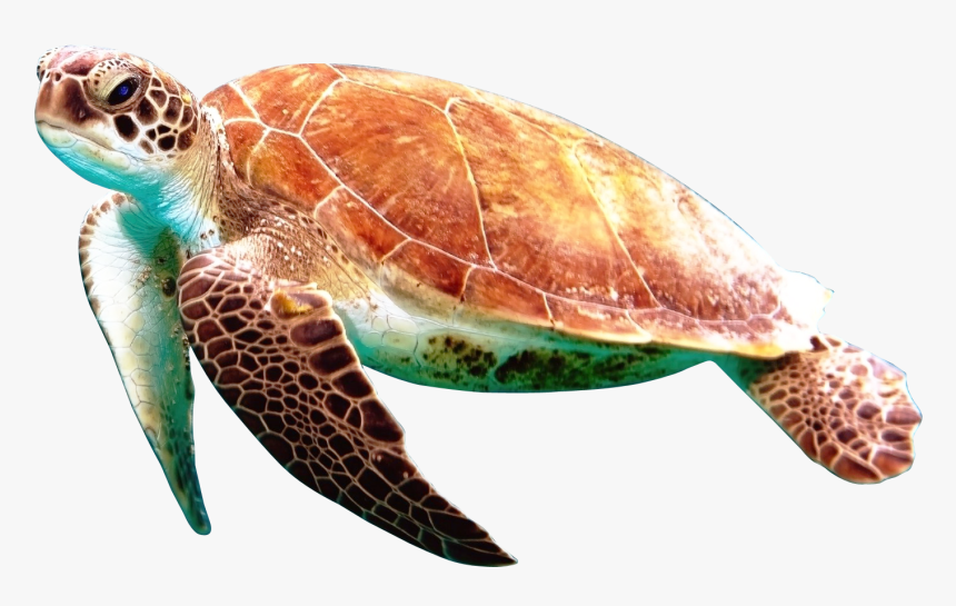 Turtle Png Image - Transparent Background Sea Turtle Png, Png Download, Free Download