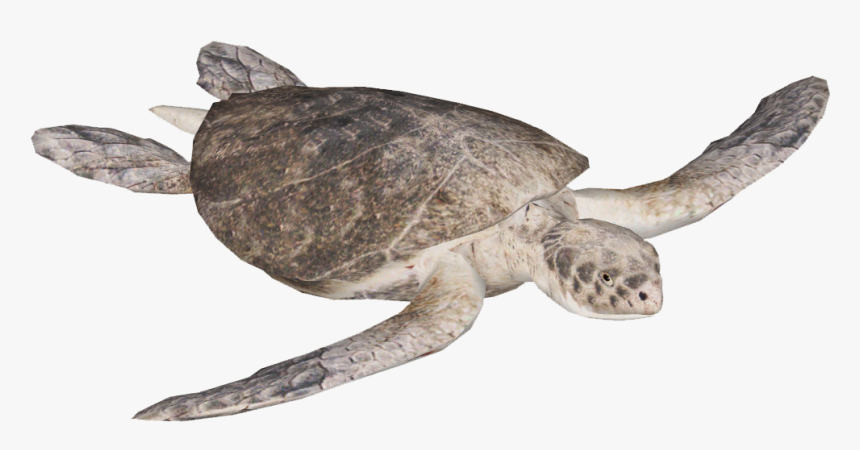 """Kemp""""s Ridley Sea Turtle , Png Download - Olive Ridley Sea Turtle Png, Transparent Png, Free Download"""