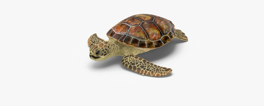 Turtle Transparent Png - Loggerhead Sea Turtle Png, Png Download, Free Download