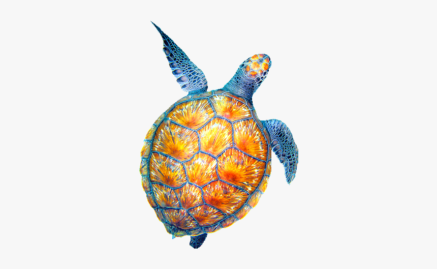 Collection Of Sea - Turtles Tumblr Png, Transparent Png, Free Download
