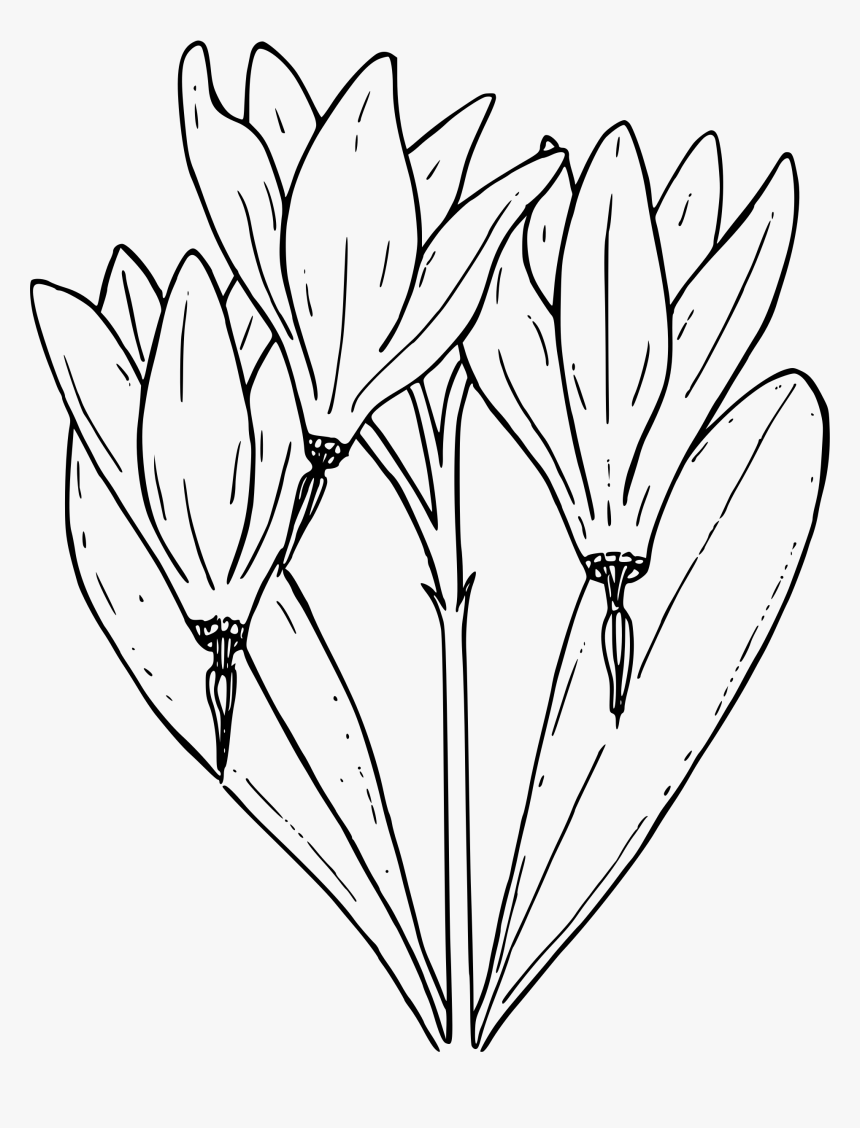 Desert Shooting Star - Shooting Star Flower Coloring Page, HD Png Download, Free Download