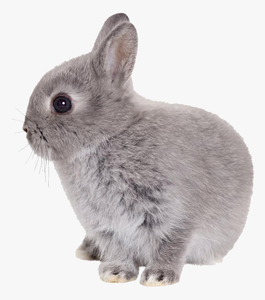 Easter Rabbit Transparent Png Png Download - Rabbit Transparent Png, Png Download, Free Download