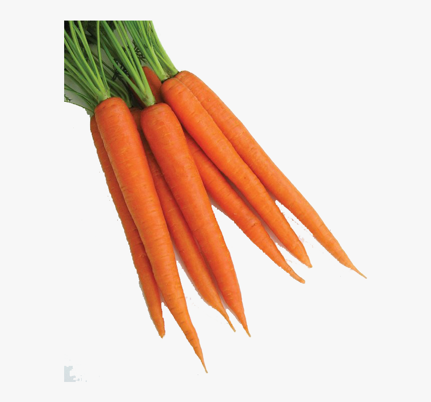 Carrot Png Clipart - Carrot Png, Transparent Png, Free Download