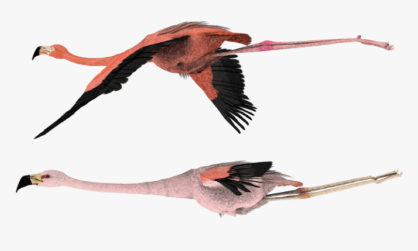 Flying Flamingo Png - Flying Flamingos For Sale, Transparent Png, Free Download