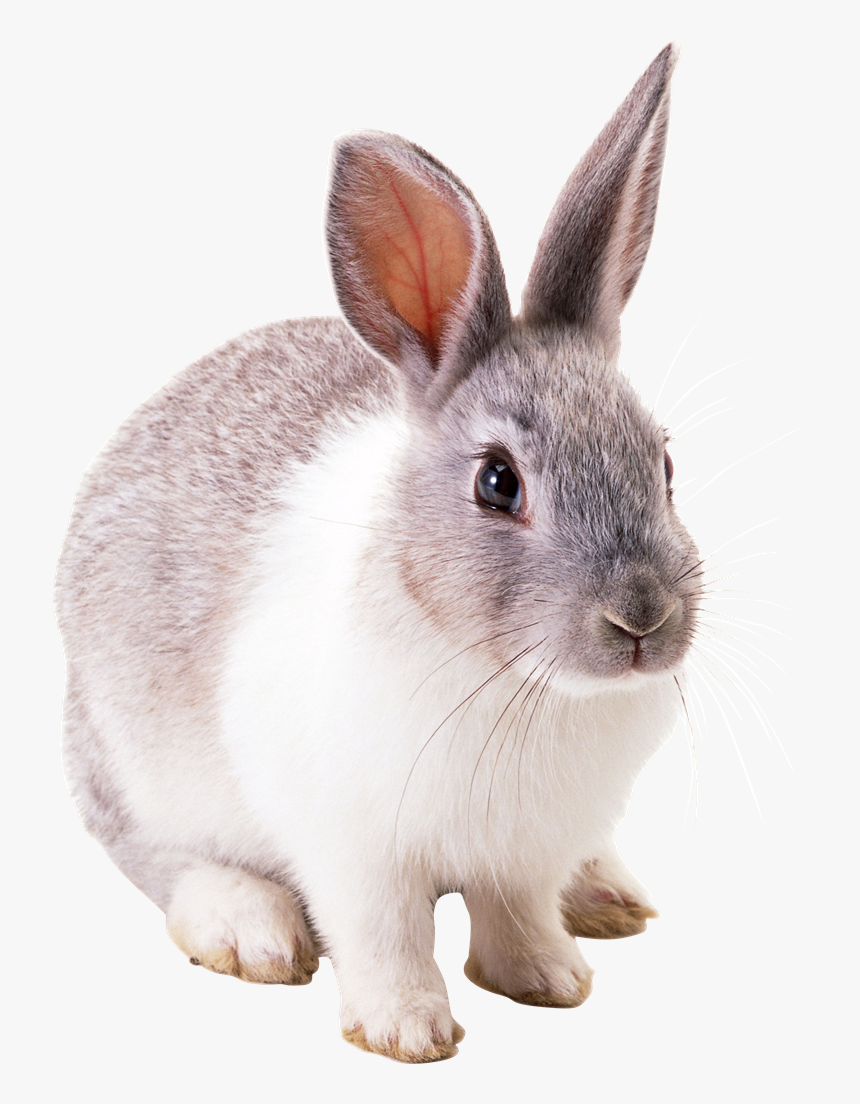 Baby Easter Bunny Png Photo - Rabbit Png, Transparent Png, Free Download