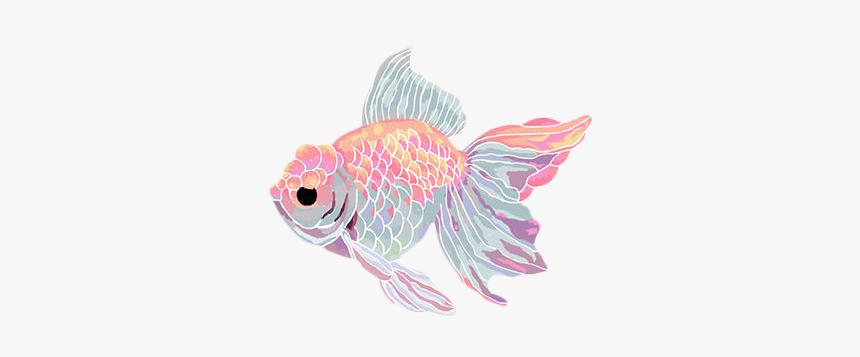 Transparent Sticker Blg Soft Grunge Blg Fish Png Png Download Kindpng