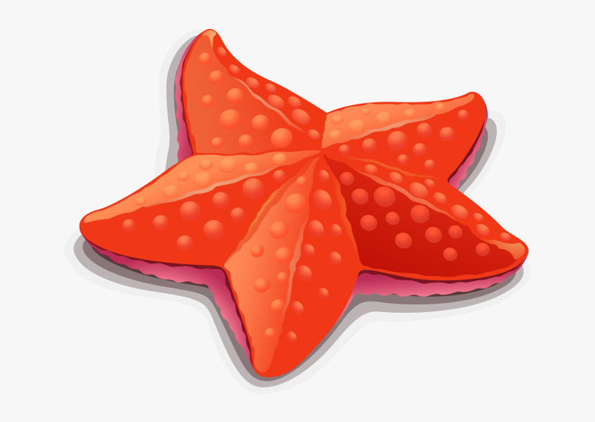 Starfish Clipart Png Image Free Download Searchpng Starfish Cartoon Clip Art Transparent Png Kindpng