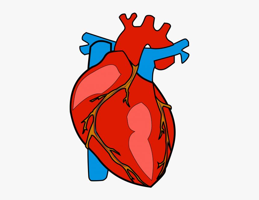 Heart clipart. Free download transparent .PNG   Creazilla