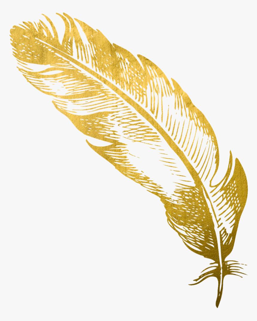 Https Www Kindpng Com Picc M 115 1153907 Transparent Feathers Cute Gold Feather Pen Png Png Png Gold Feathers Feather Pen Silver Flowers