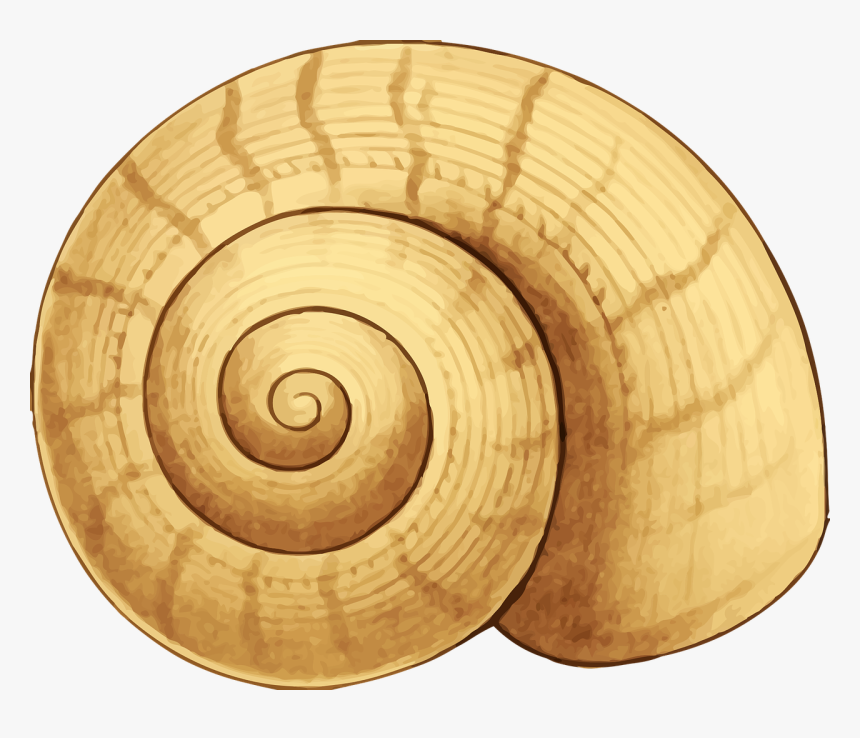 Spiral Shell Clip Art, HD Png Download, Free Download