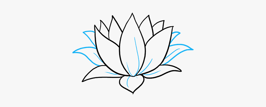 How To Draw Lotus Flower Water Lily Drawing Simple Hd Png Download Kindpng