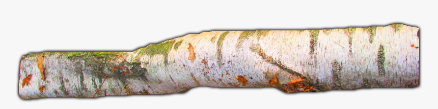 Large Tree Branch Png, Transparent Png, Free Download